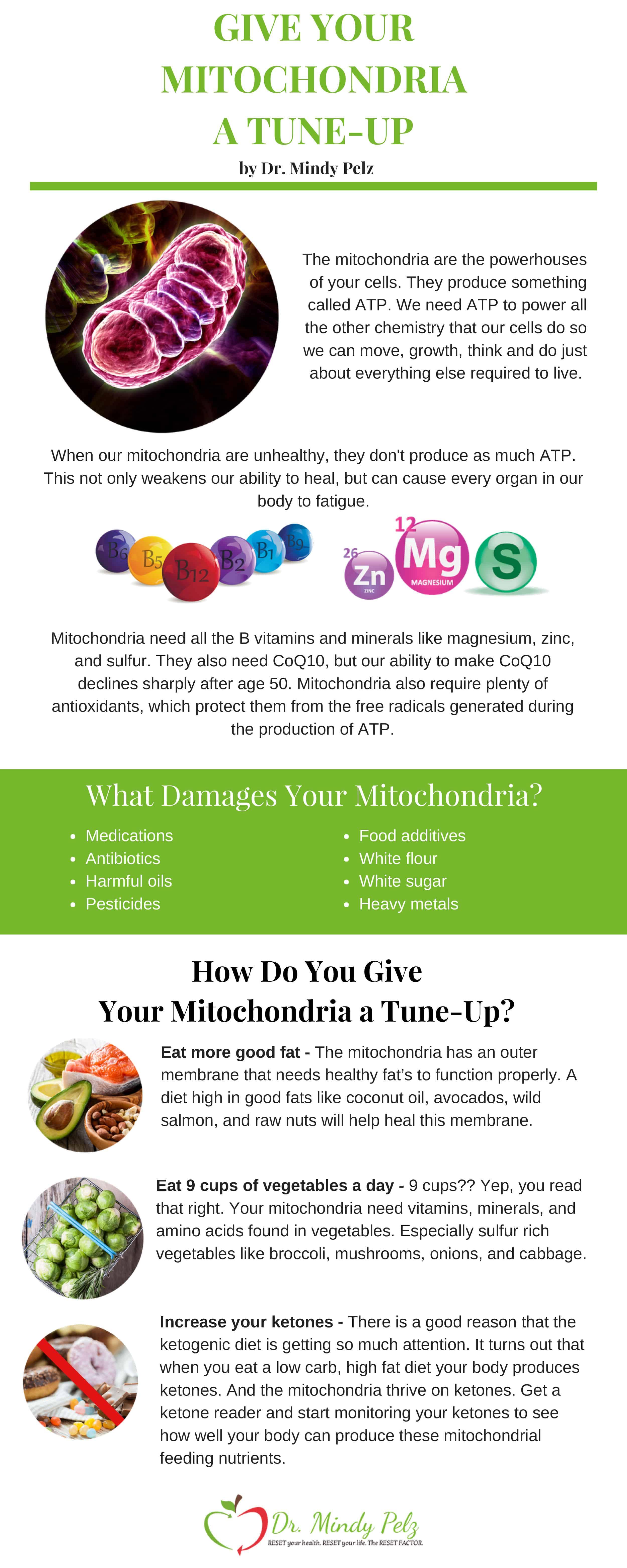 your mitochondria