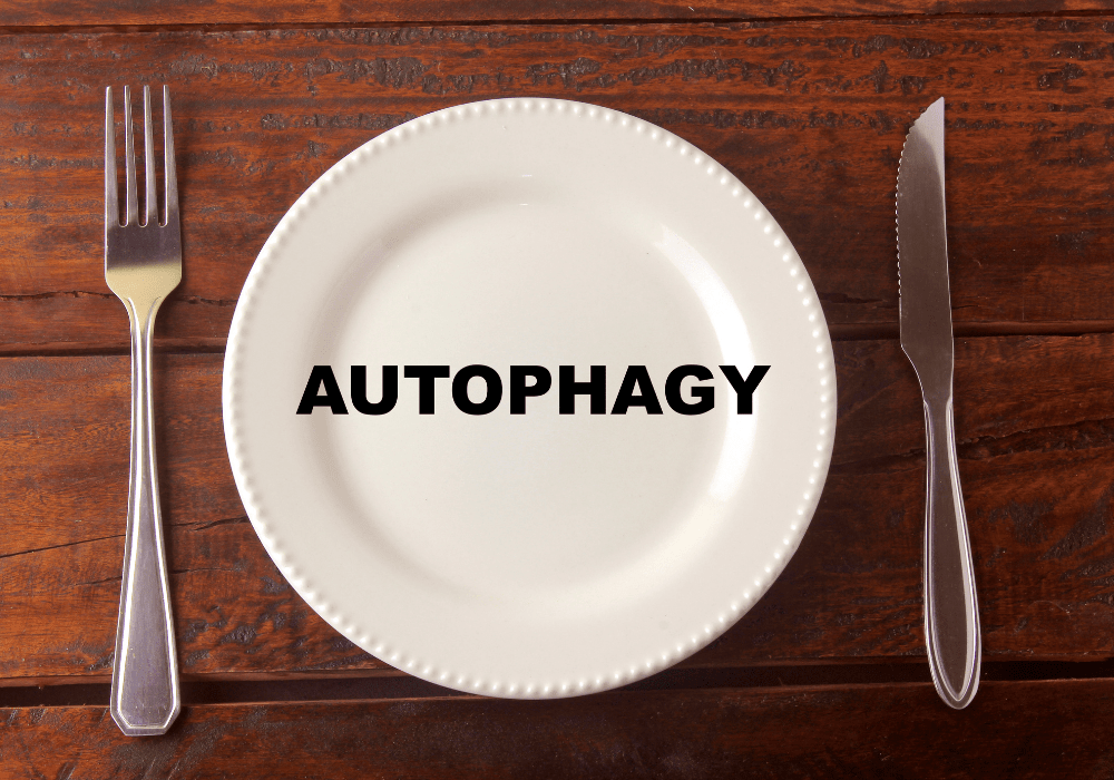 autophagy and your immune system